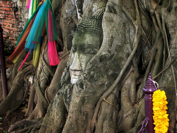 Buddha in  a Tree