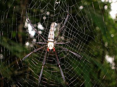 Khao Sok National Park - Spider