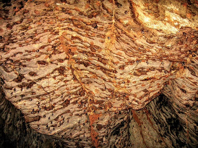 Khao Yai National Park - Bat Cave