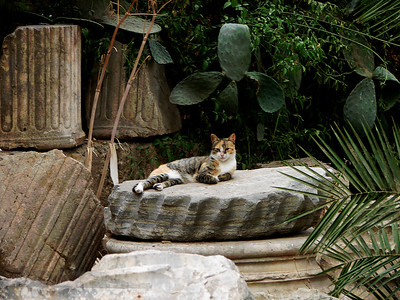Cat on a Stone - Carthage
