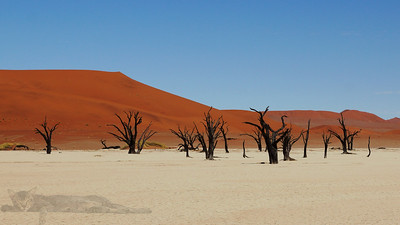 Dead Tree Forest (Deadvlei) - Namibia