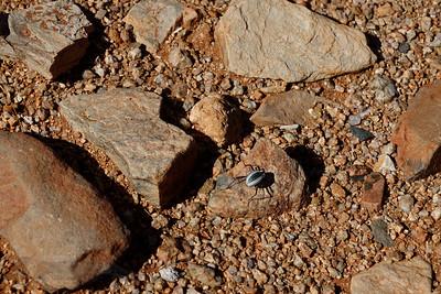 Beetle in the Desert