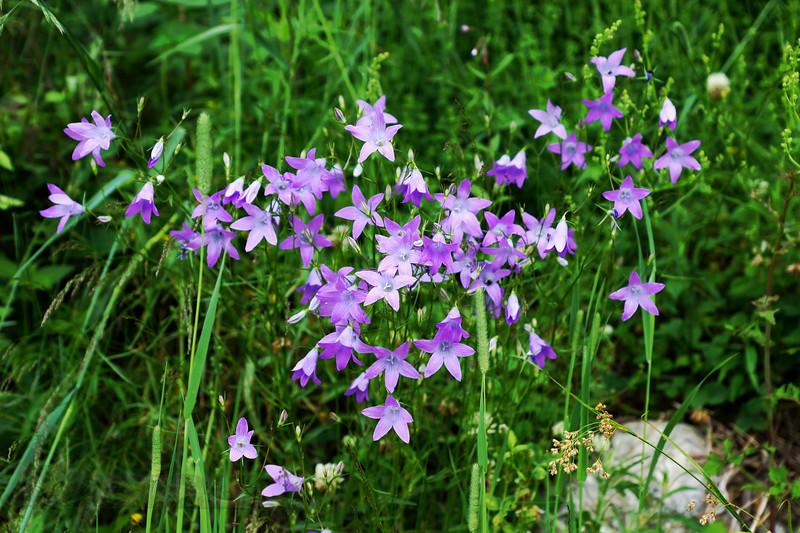 Sonder Pichl - Wild Flower