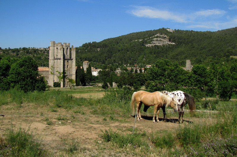 Abbey of Saint Mary of Lagrasse and Horses