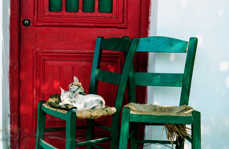 Cats in Naxos