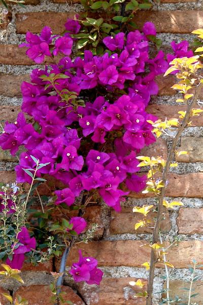 Flowers in Sicily