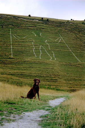 Long Man of Wilmington - Brown Dog