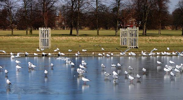 Home Park - Hampton Court - Long Water