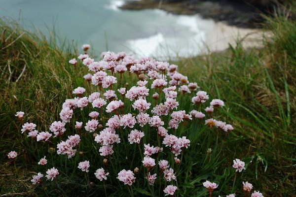 Flowers above the Beach