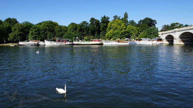River Thames at Kingston