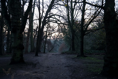 Cannizaro Park - Dark Path