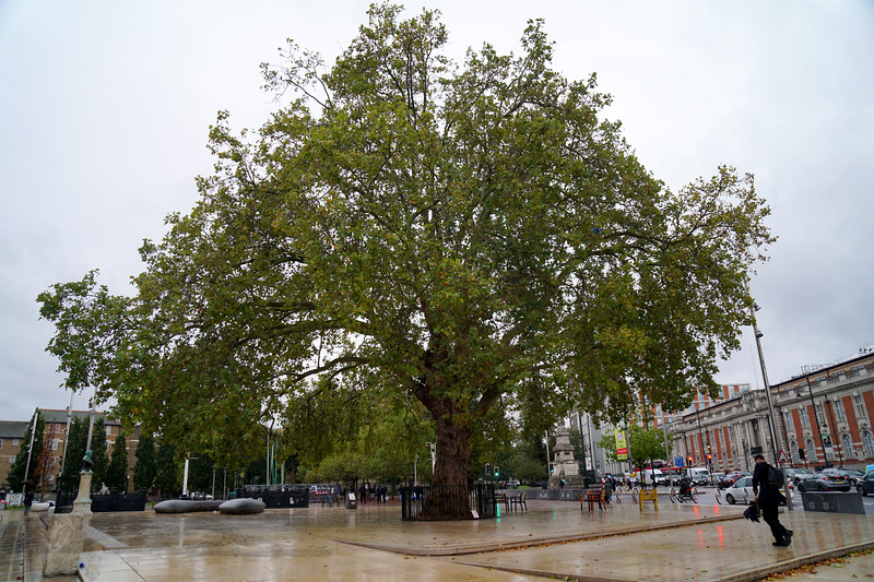 Brixton - Windrush Square - The Plane Tree