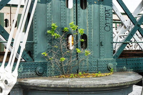 A Plant Surviving on The Hungerford Railway Bridge
