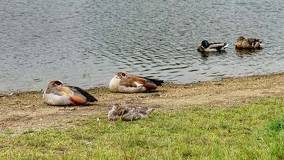 Birds by Rushmere on Wimbledon Common