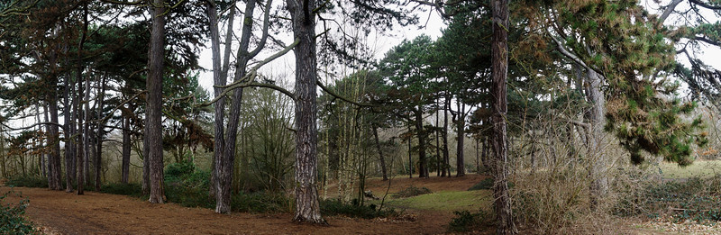 Trees around Caesar's Well, Wimbledon Common