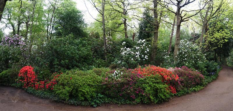 Cannizaro Park - Colourful Bushes