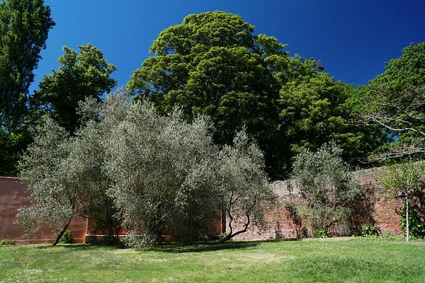 Cannizaro Park - Italian Garden