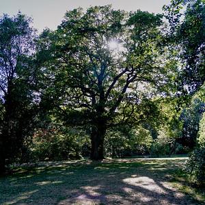 Cannizaro Park - Tree in Sunlight