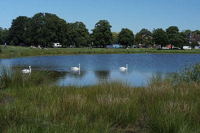 Rushmere Pond Swans