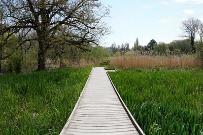 Morden Hall Park - Boardwalk - National Trust - Morden - 2021