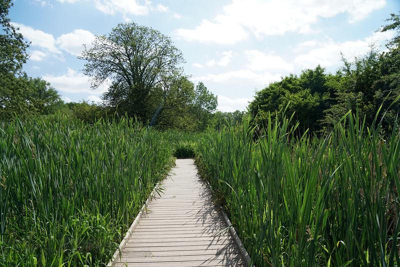 Boardwalk in the Wetlands