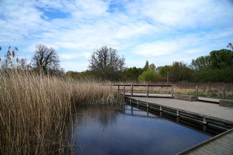 Boardwalk -Morden Hall Park - NT
