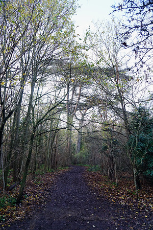 Cannon Hill Common - Footpath