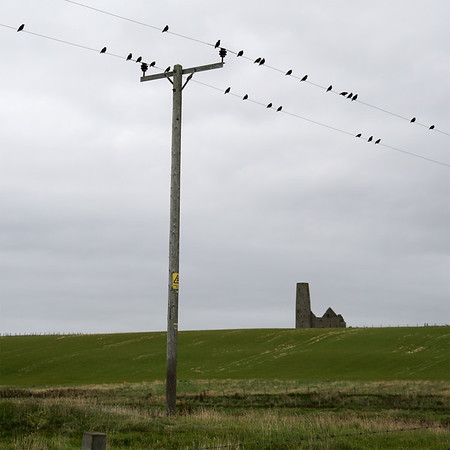 Egilsay - Birds on a Wire & St Magnus Church