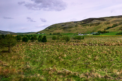 View from a Train Window
