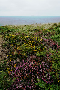 Heather on the Cliff