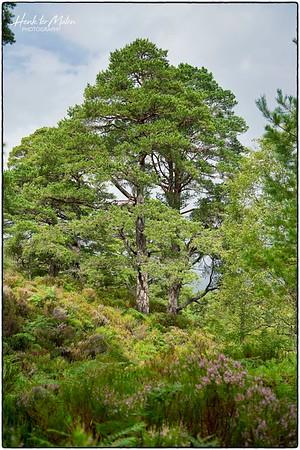 Loch Maree - Beinn Eighe National Nature Reserve - Woodland Trail