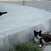 Stray cats lounging in the street.