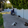 Stray cats lounging on a Rhodes Town street.  There are many many stray cats in Greece.  This photo actually has 6 cats in total.