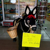 Convenience store with donkey that apparently English-speaking tourists really liked to try to sit on....