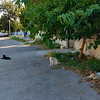 More stray cats on the street.  There are 8 cats in this photo.