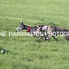 droopys town2