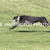 droopys eshwary