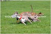 COURSING 2012 : 58 galleries with 8200 photos