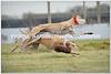 delightful masrks jumps Moate lady