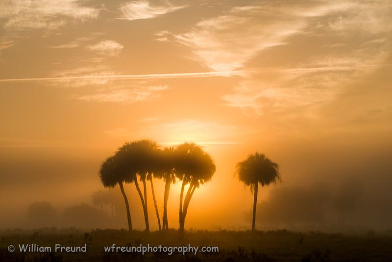 Sunrise at Dinner Island Ranch Wildlife Management Area, Florida