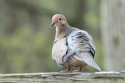 birdfeeder-7310
