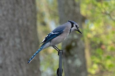 birdfeeder-7244