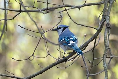 birdfeeder-7265