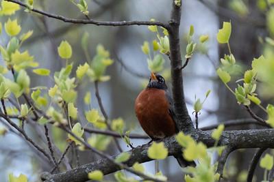 birdfeeder-7121