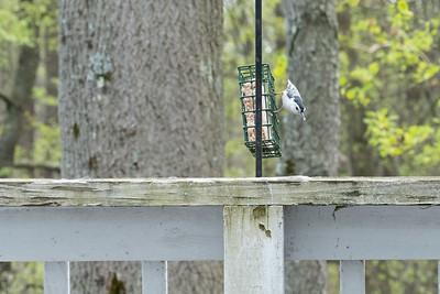 birdfeeder-7339