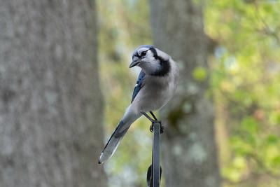 birdfeeder-7251