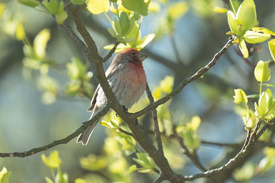 birdfeeder-7037