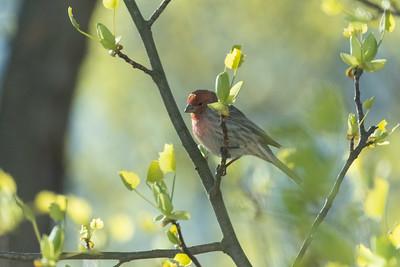 birdfeeder-7048