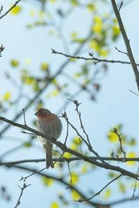 birdfeeder-7206