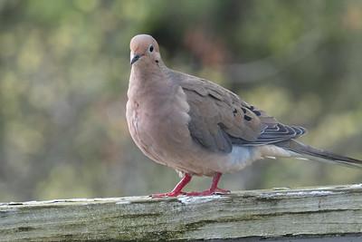 birdfeeder-7299